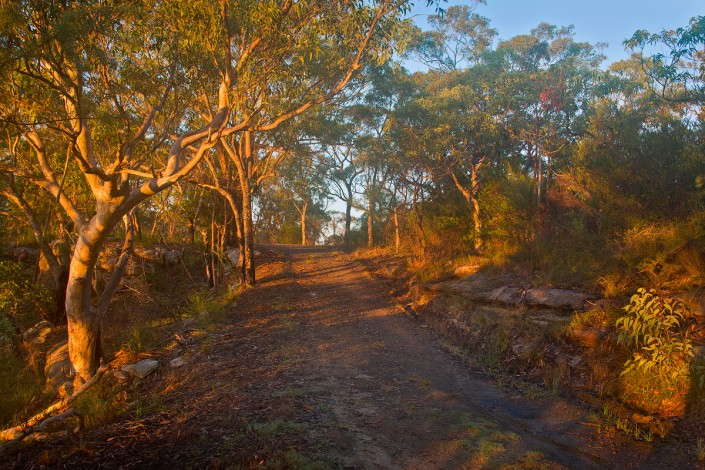 A bush sunrise near Berowra, in Berowra Valley Regional Park
