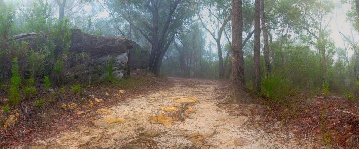 Andrew Barnes Landscape Photography The Path Ahead Berowra National Park