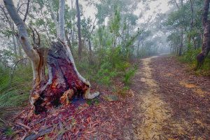 Turnaround, Berowra, Australian Landscape Photography, Berowra Waters, Berowra Valley National Park