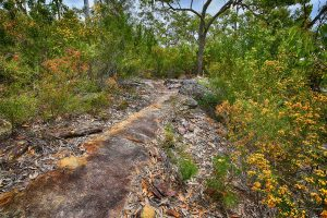 Spring Flowers, Berowra, Australian Landscape Photography, Berowra Waters, Berowra Valley National Park