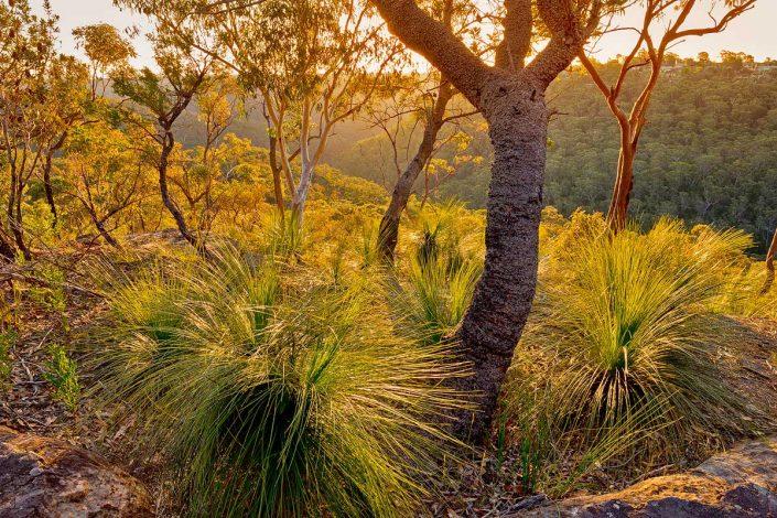 Berowra, Berowra Valley National Park, Berowra Waters, Sunset, Landscape Photography, Landscape Photography Sydney